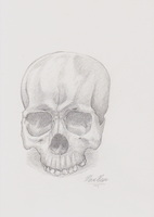 Skull Sketch by F33R-the-B33R