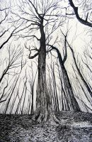 India ink - Enchanted Tree by Lynn003