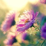 sunny day by Megson