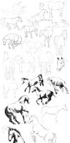 Horses Practice by Charneco
