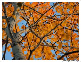Autum in the air by jamesboy