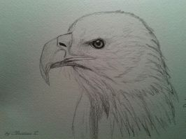 bald eagle by Monstacookie