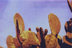 Prickly Pear by ClemIsNoise