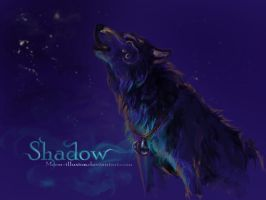 Shadow by MUSONART