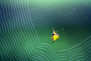 Spider Web 02 by josgoh