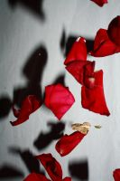 Raining Petals 0051 by Akuard-Stock