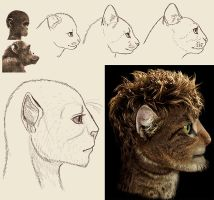 Feline Humanoid Sketches by Viergacht