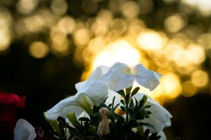 Flowers in Sunrise by LimeSoftSolutions