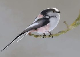 Long-Tailed Tit by chugglepuff