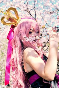 Luka Cherry Blossom by lollyt