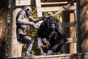 Monkey Business 3 by 904PhotoPhactory