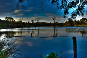 Banyule Swamp by CRatna