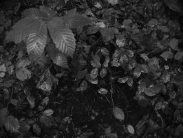Feuilles humides by yuushi01