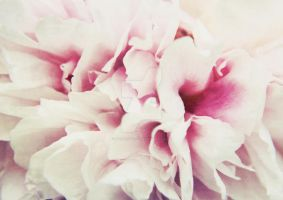 Peony II by MagpieMagic