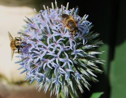 Bees in the garden by Vincent-Malcolm