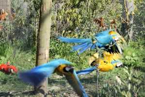 Parrots on the move by picture-melanie
