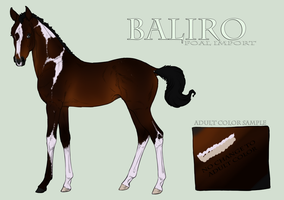 Baliro Import Foal by EquineInc