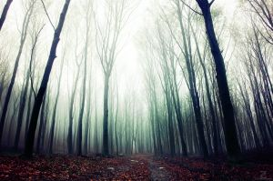 If These Trees Could Talk XXVI. by realityDream