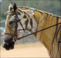 Tiger Horse by PhotoAlterations