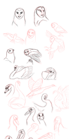 Bird practice sketches by zavraan