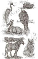 Animal Doodles by Spudnuts