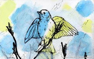 Songbird on Yellow and Blue by cael-illus