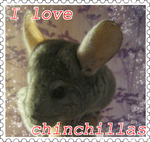 stamp chinchillas by MirLubvi17
