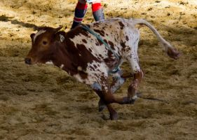 STOCK 2013 Rodeo-221 by fillyrox