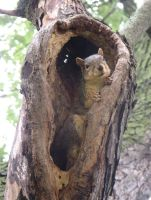 Squirrel Fortress 12b by Windthin