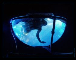 A mermaid in a fishbowl by irikoy-photo