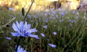 wild flower of Greek nature by ArisAnthopoulos