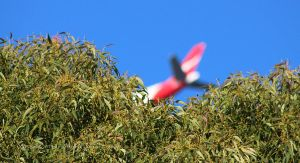 Qantas overhead by CouchyCreature