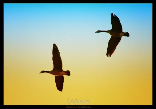 Migration 2 by Sagittor