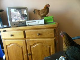 Chickens playing xbox360? by cgisby