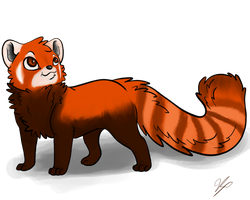 colored red Panda by MidnasFire500