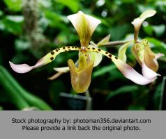 Stock Flower 8161 by photoman356