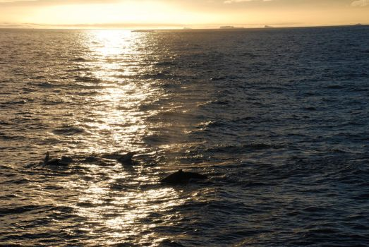 Sunset with whales by timmed