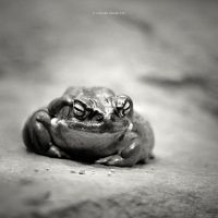 The Toad by DREAMCA7CHER