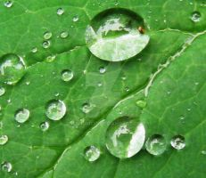 waterdrops 4 by GreenMusic