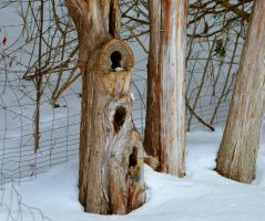 The Trees Have Eyes by donnatello129
