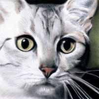 Silver Egyptian Mau by Isadorrah