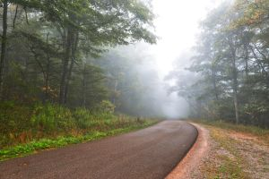 Misty Forest Road - Spruce Knob by somadjinn