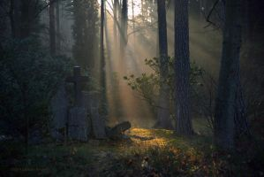 - Forest Cemetery - by UNexperienced