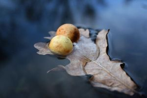 Winter balls by Mikeleus