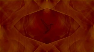 WS Wallpaper for the illumOS based distros by rvc-2011