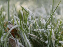 Frozen grass by towel401