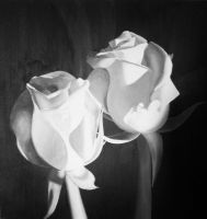 Greyscale Roses by DerSketchie
