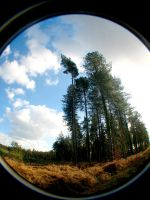 tall trees by smevstock