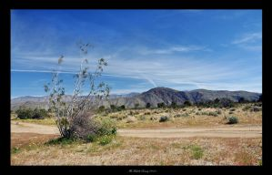 Anza Borrego by MichelleRamey