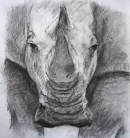 Charcoal drawing of Rhino by Barbarian-J